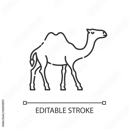 Photo Camel pixel perfect linear icon