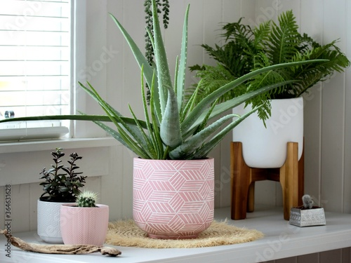 Fototapeta Group of indoor house potted plants in a pots