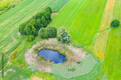 Carta da parati Aerial view of natural pond surrounded by pine trees. Europe