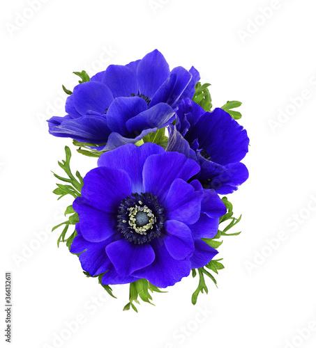Fototapeta Blue anemone flowers