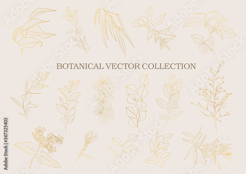 Fotomural Botanical garden. Vector collection of hand drawn plant elements