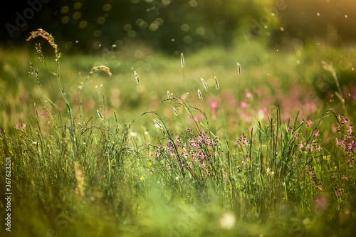 Letnia łąka w świetle słońca