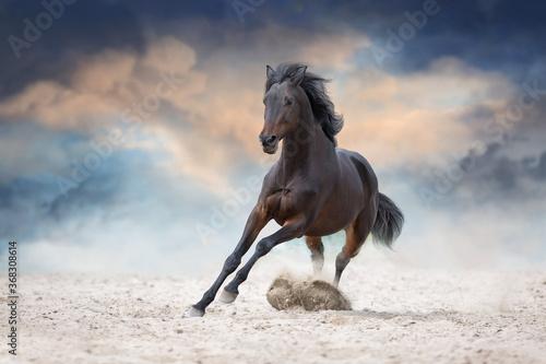 Murais de parede Bay stallion with long mane run fast against dramatic sky in dust