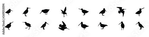 Obraz na płótnie a set of common snipe drum silhouettes. vector illustration