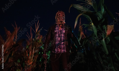 Fotografering Walking dead zombie stands in cornfield with metal chain.