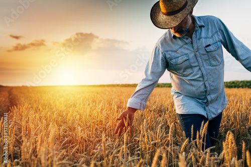 Fototapeta farmer walking through wheat field, sunset scene