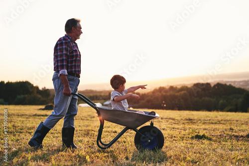 Billede på lærred Grandfather driving his grandson in wheelbarrows at sunset