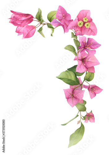 Fotografía A pink bougainvillaea arrangement (corner) hand painted in watercolor isolated on a white background