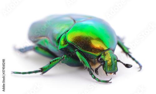 Canvas-taulu Green beetle isolated.