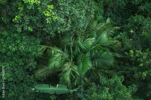 Fototapeta tropikalna roślinność liście zielone