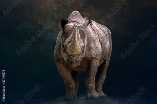 Fotografia portrait of a rhino standing in front of a black background