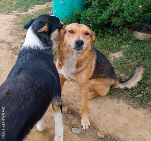 Stampa su Tela Friendship between two dogs