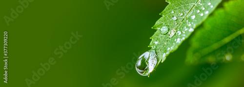 Fotografia Big water drop Water on green leaf