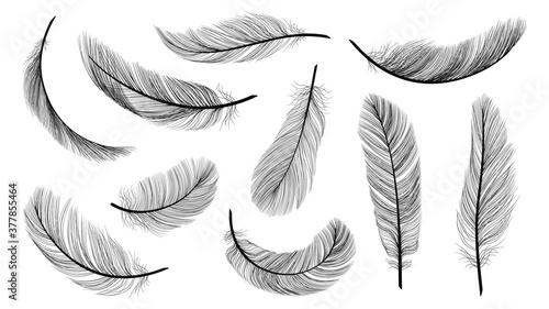 Tablou Canvas Black feathers