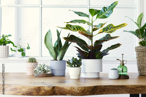 Photo Modern composition of home garden filled a lot of beautiful plants, cacti, succulents, air plant in different design pots