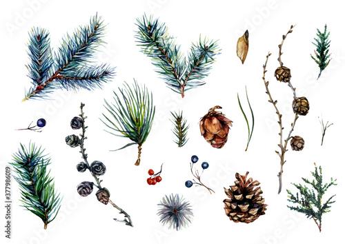 Fotografía Watercolor Collection of Conifer Branches and Pinecones