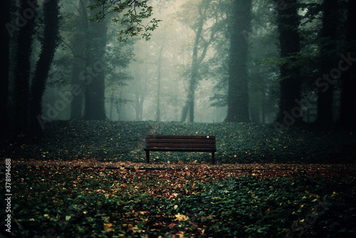 Fotografering Empty bench in the forest on a gloomy autumn day