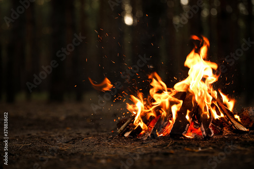 Foto Beautiful bonfire with burning firewood in forest. Space for text