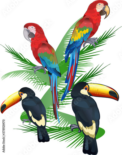 Fotografie, Obraz Red parrot macaw