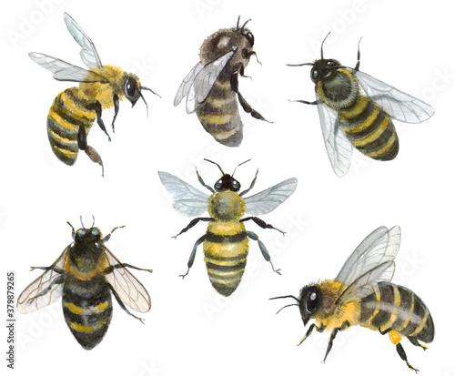 Obraz na płótnie Watercolor set of bees