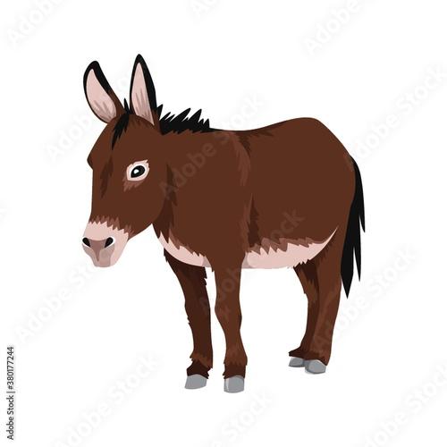 Obraz na płótnie donkey