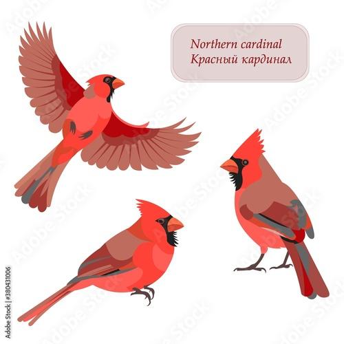 Fotografía Flying, sitting and jumping Northern cardinal bird figures