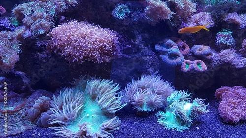 Fotografía coral reef