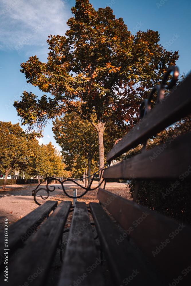 Bench in the autumn park - obrazy, fototapety, plakaty