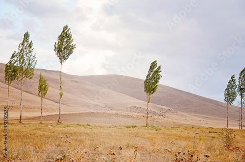 Obraz na plátně poplar trees and mountains in autumn