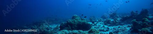 Obraz na plátně under water ocean / landscape underwater world, scene blue idyll nature