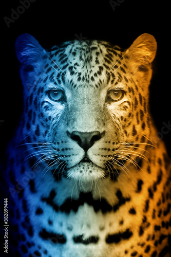 Portrait of leopard in a hot and cold shade