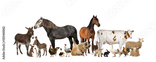 Fotografia Large group of many farm animals standing together