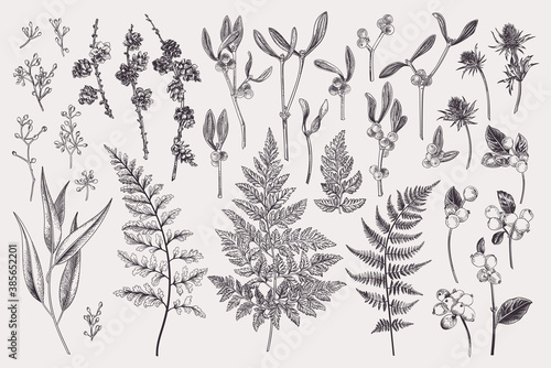 Canvas-taulu Set with winter plants.