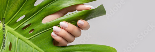 Female hand with pink nail design. Rose nail polish manicure. Female hand hold green leaf on grey background. Banner