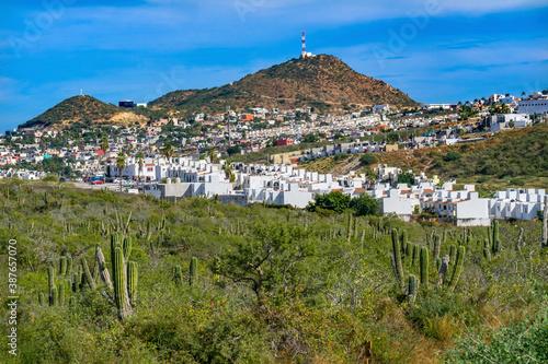 Mexican Village Cardon Cactus Sonoran Desert  Baja Los Cabos Mexico Fototapeta