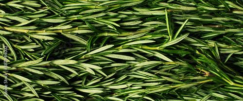 Fotografie, Obraz Macro fresh rosemary green organic background
