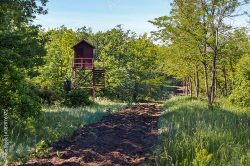 Valokuva Wooden watch tower in green summer wood near firebreak for wildfire prevention