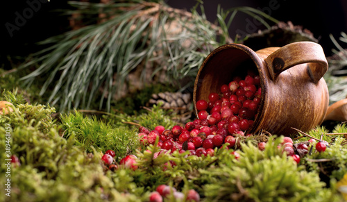 Canvas Print Red berries of ripe cranberries in a clay pot on a moss cover, at forest floor