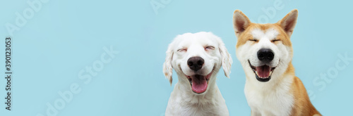 Photographie Banner two smiling dogs with happy expression