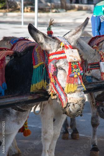 Obraz na plátně Vertical shot of a donkey in Mijas, Malaga, Spain