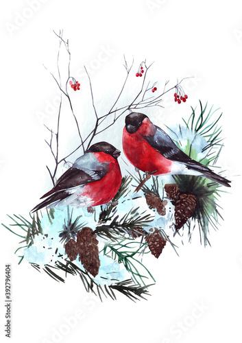 Canvas Watercolor winter birds