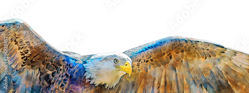 Leinwand Poster Digital watercolor illustration of a bald eagle in flight