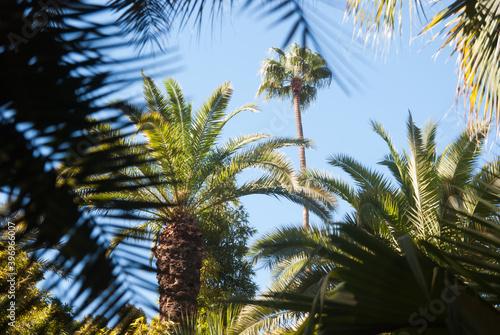 Tropical environment Fototapet