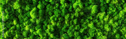 Photo decorative moss for interior decoration