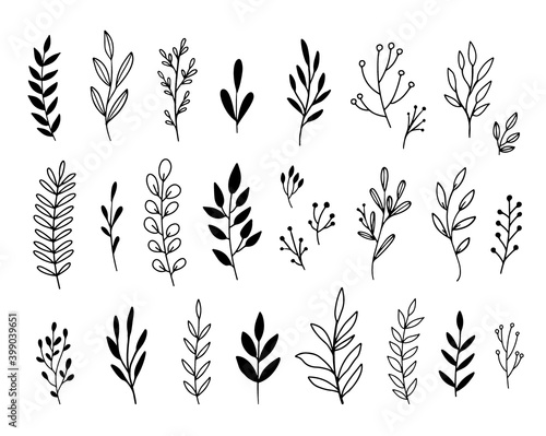 Photo Vector branches and leaves