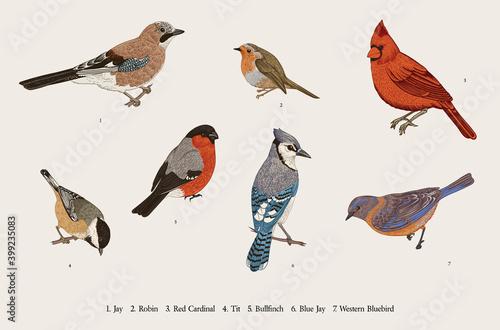 Wallpaper Mural Winter Birds