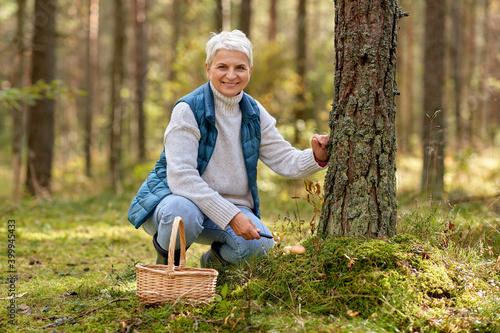 Obraz na płótnie picking season, leisure and people concept - senior woman with basket and mushro
