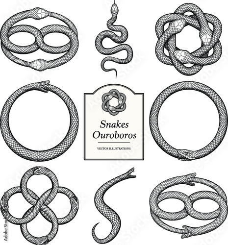 Wallpaper Mural Snake and Ouroboros Illustrations in vintage style