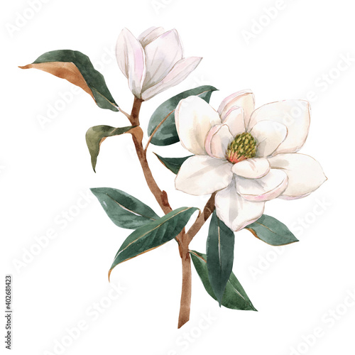Fotografie, Obraz Beautiful stock illustration with hand drawn watercolor gentle white magnolia flowers