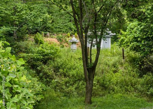 Obraz na plátně Concrete burial chamber in tall grass